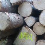 Das geerntete Stammholz