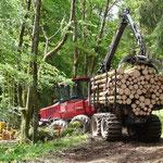 Abtransport des Stammholzes im Sommer 2009