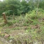 Gerodete Fläche nach dem Holzabtransport - Urwald von morgen!
