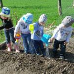 Wir pflanzen Kartoffeln und wässern sie...