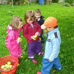 Äpfel ernten und Würmli begutachten.