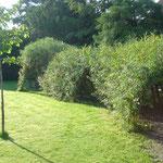 Weidenhaus mit Weidengang