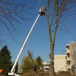 Forstarbeiten mit Hebebühne Kloten, Eberhard Gartenbau AG