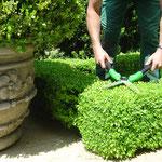 Einfassungsbuchs schneiden Eberhard Gartenbau AG Kloten