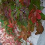 Alles voller bunter Blätter ♥