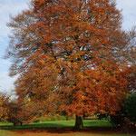 Da waren die Bäume noch bunt - November