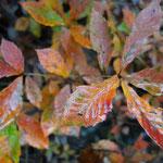 山で見る今年最後の紅葉でしょうか