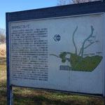 歴史で勉強した旧・谷中村の歴史 実家が台東区谷中なので昔から気になってました