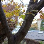 ミーちゃんは木登りも得意です!