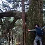 石宮裏にある巨樹に抱きつきます!