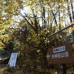 翌日は夫神岳へ 紅葉がいいです