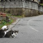 途中の沓掛温泉の共同浴場前で出会った猫ちゃん達