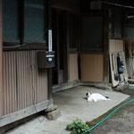 猫ちゃん発見!!