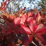 山頂付近はいい感じの紅葉です
