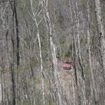 赤い屋根の種平小屋が見えました!一気に急下降です!11時半には戻れました!