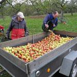 Wenn die Äpfel im Hänger liegen, sieht man in konzentrierter Form, was die Natur hervorgebracht hat.