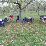 Die abgebildeten Aktiven und zwei weitere NABU-Mitglieder (nicht im Bild) haben innerhalb von 2 Stunden 1400 kg Äpfel gelesen.