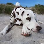 Heidi HoneyBee vom Furlbach entspannen am Strand ist schön...15.06.2017
