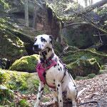 Kim Wilde vom Furlbach beim Wandern...10.04.2017