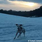 Juts Bonny vom Furlbach Januar 2017