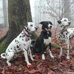 Cassiopeia vom Sayner Schloss, Hundefreundin und Just Bonny vom Furlbach...27.01.2018