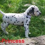 "Kryddhundens Ice Princess ""Mimmi"" HUA"