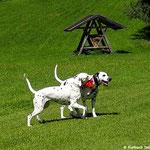 Somora´s Karamel Kiss und Fanny vom Furlbach beim toben im Urlaub...13.06.2017