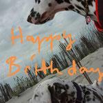 Angie vom Furlbach und Just Bonny vom Furlbach gratulieren den Kchen zum Geburtstag aus dem Urlaub...05.07.2017