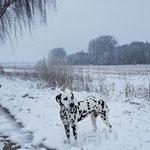 Galina vom Furlbach...03.12.2017