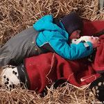 Galina vom Furlbach in der Pferdebox beim kuscheln...27.02.2018