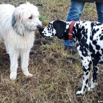 Fienna vom Furlbach auf der Hundewiese...27.01.2018