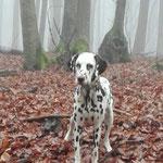 Just Bonny vom Furlbach im mystischen Nebel...27.01.2018