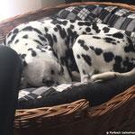 Cooper vom Furlbach...15.10.2017