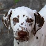"Kryddhundens Ice-Choklate ""Tassa"" LUA....19.10.2016"