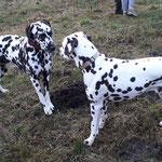 Fienna vom Furlbach und John Boy vom Hause Cideri auf der Hundewiese...27.01.2018