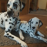 "Spots of Cinnamon an Easy Life ""Easy"" mit seiner Schwester Spots of Cinnamon Dacota Johnson ""Johnson"" ...24.06.2017"