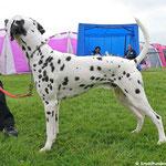 """Kryddhundens Ice-Rock """"Rocky"""" LUA auf Ausstellung...07.06.2017"""