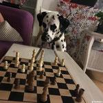 Kirk Douglas vom Furlbach hoch konzentriert beim Schach...12.11.2017