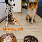 Happy Birthday Ida Indiana vom Furlbach mit Ihrer Lebensgefährtin...29.01.2021