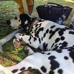 June Carter vom Furlbach entspannt in der Tockana...16.06.2017