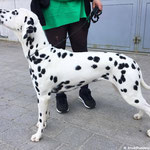 "Kryddhundens Ice-Vanilla ""Nilla"" HUA...23.04.2017"