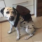 Kurt Russel vom Furlbach packt schon mal seinen Rucksack für den Urlaub...11.10.2017