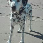 Angie vom Furlbach...Sonne, Strand und Meer was braucht eine Angie mehr...01.07.2017