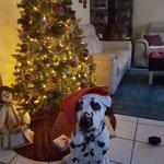 Dyson vom Furlbach vor dem Weihnachtsbaum...24.12.2017