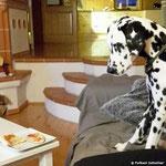 Forrest Gump vom Furlbach hypnotisiert die Pizza...07.10.2017