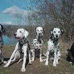 June Carter vom Furlbach, Falco, Just Bonny vom Furlbach, Cassiopeia vom Sayner Schloß und Leni....31.03.218