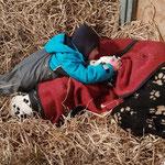 Harrison Ford vom Furlbach und Galina vom Furlbach in der Pferdebox beim kuscheln...27.02.2018