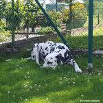 Blade vom Furlbach nach getaner Gartenarbeit...29.07.2017