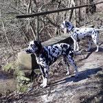 Fienna vom Furlbach mit Ihrer Schwester Fanny vom Furlbach...19.03.2018