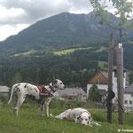 Fanny vom Furlbach und Somora´s Karamel Kiss machen das Berchtesgadener Land unsicher...07.06.2017